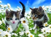 Ravensburger puzzle Sladká koťata 100 dílků XXL